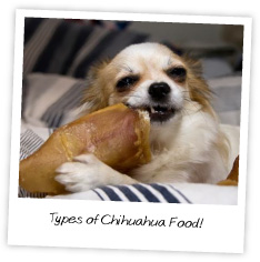 Types of Chihuahua Food