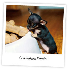 Chihuahua Foods