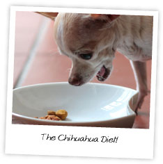 The Chihuahua Diet