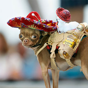 chihuahua-clothes-and-costumes